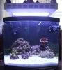 90w led aquarium lighting